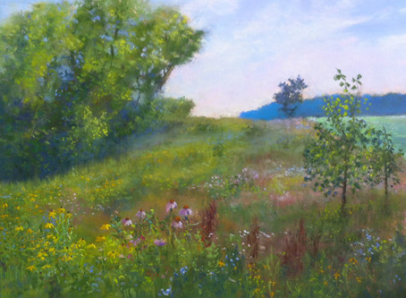 Pastel Painting: Wildflower Wonders (and a special offer)!