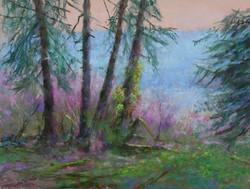 Beneath the Pines at Lake Quinault