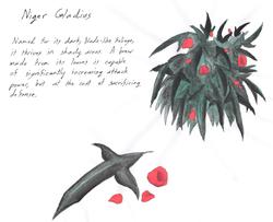 AC - niger gladius