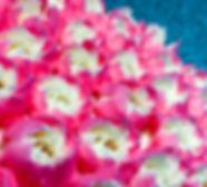 08-1-18-0433_edited.jpg