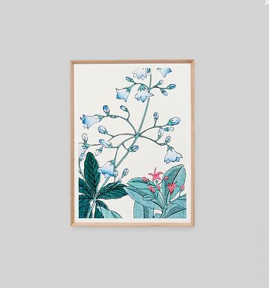 Print Bellflower Woodblock 2