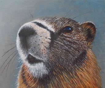 Marmot sm.jpg