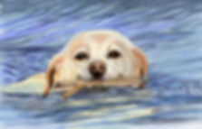 Painting of a labrador dog swimming