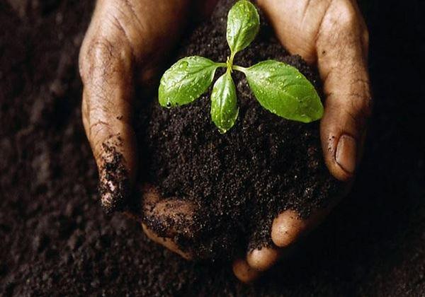 Soil1.jpg