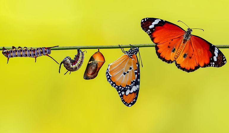 Butterfly Emenex LinkedIn page.jpg