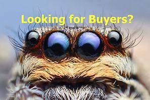 foureyes buyers2.jpg