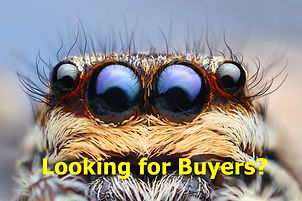 foureyes buyers.jpg
