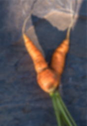 carrot%20on%20rock_edited.png