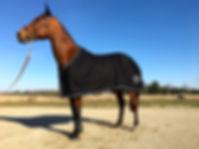 Custom Horse Blakets