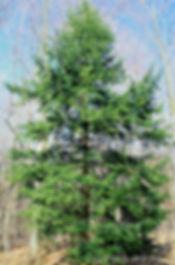 Hemlock-East-36693.jpg