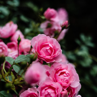 Garden and Flower Photography-7.jpg