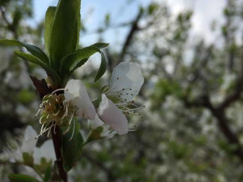מה עושים באביב כדי להקל על אלרגיות ?