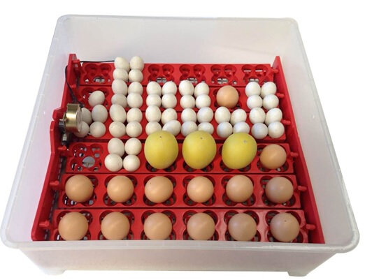 144 Quail Egg AUTOMATIC TURNER with 1/240rpm Motor