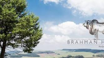 Brahman Hills... beauty in Nottingham Road.