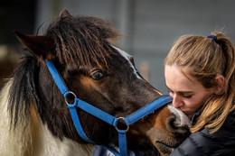 Novita Biotechnology & Regenesis Vet lends a helping hoof to Cart Horses.