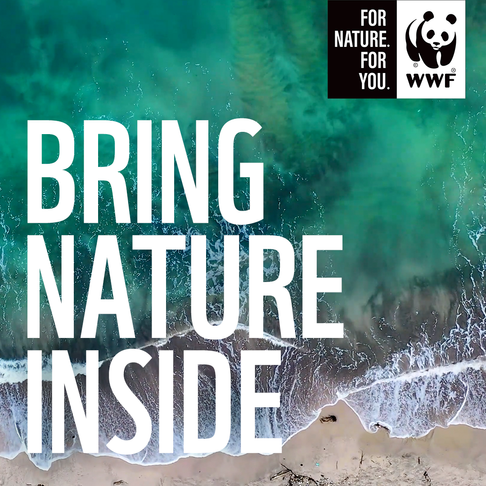 WWF SA soundscape playlist brings Nature inside.