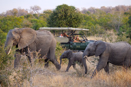 Jock Safari Lodge re-opens Fitzpatrick's family camp in the Kruger National Park.