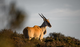 WWF South Africa and SANParks call on South Africans to help conserve our Heritage Parks.