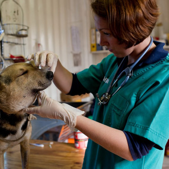 Animal clinic launches #PawMember campaign after massive reduction in funding - GET INVOLVED for R10