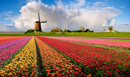 15 Surprising Facts You Never Knew About The Netherlands.