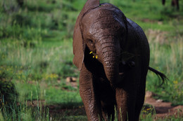 Helping elephants in captivity or distress to gain the freedom they deserve.