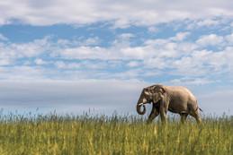 Take a virtual walk with a herd of elephants on World Elephant Day.