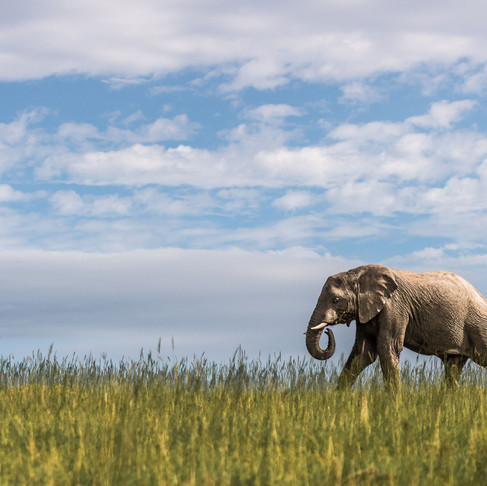 Take a virtual walk with a herd of elephants on World Elephant Day.