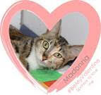 #BeMyValentine – Homeless pets offering love.