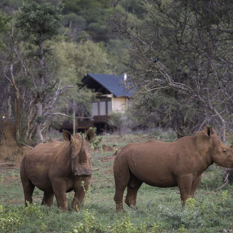 RHINO CONSERVATION experiences Introduces at Tintswalo Lapalala.