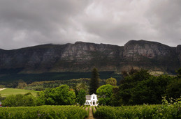 The Cape Wine Auction 2019 ...the wine event of the year approaches.