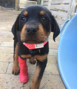 Emergency help needed for Khayelitsha pets – Coronavirus consequences.