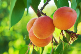 Fruit pickings, wine tasting and leisurely lunches at De Krans this Summer.
