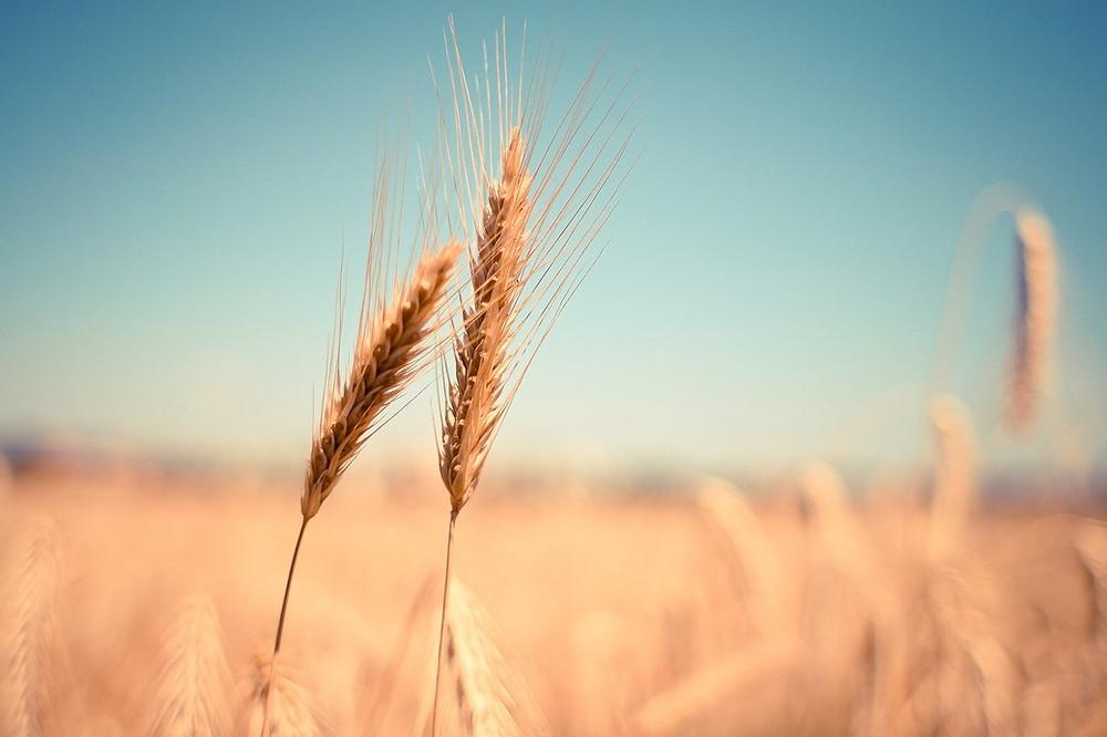 Velcí zemědělci se snaží tlačit výrobní cenu dolů, a tak se na naše talíře dostávají potraviny plné chemie.
