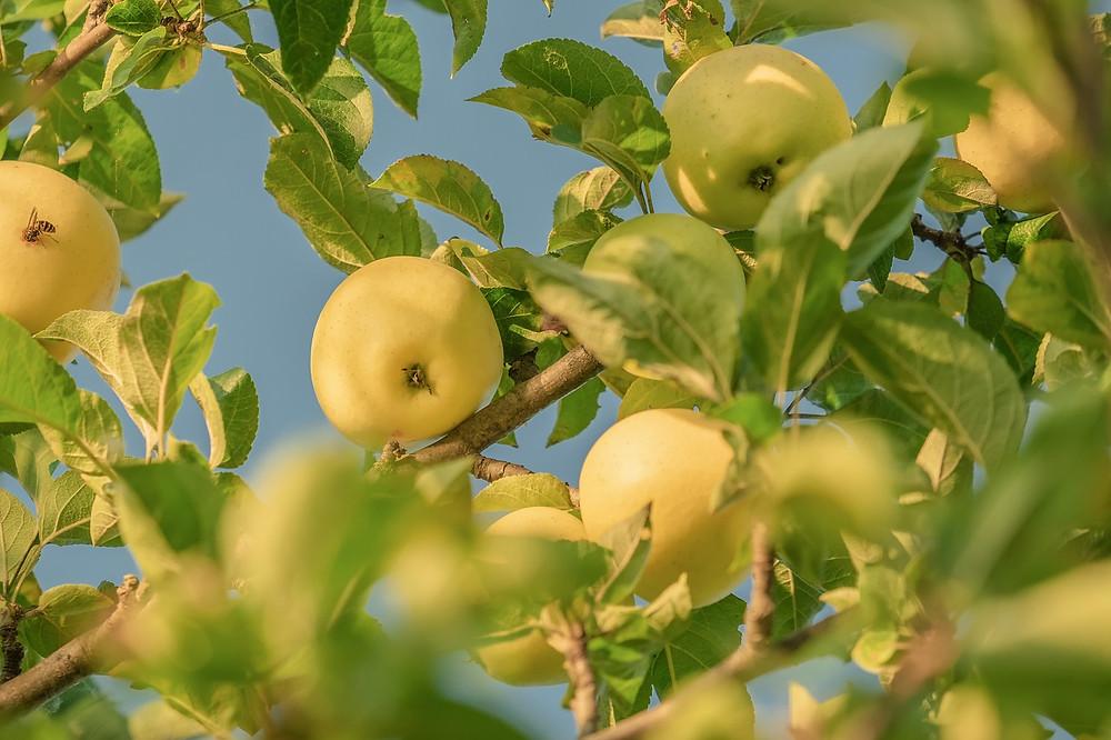 Bio potraviny prospívají životnímu prostředí i vašemu zdraví.