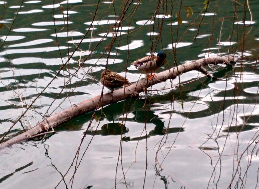 fauna lacustre