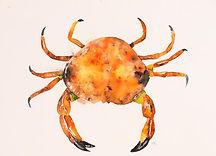 Print of Crab watercolour