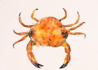 Print of crab painting