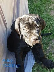 Anko9.jpg