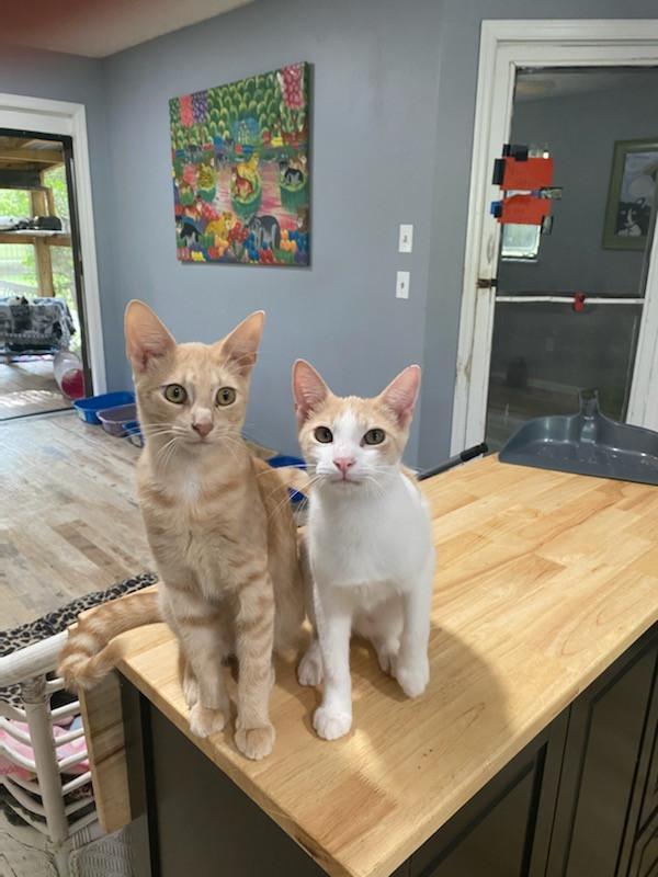 Dominos House Cat Rescue League 6.jpeg