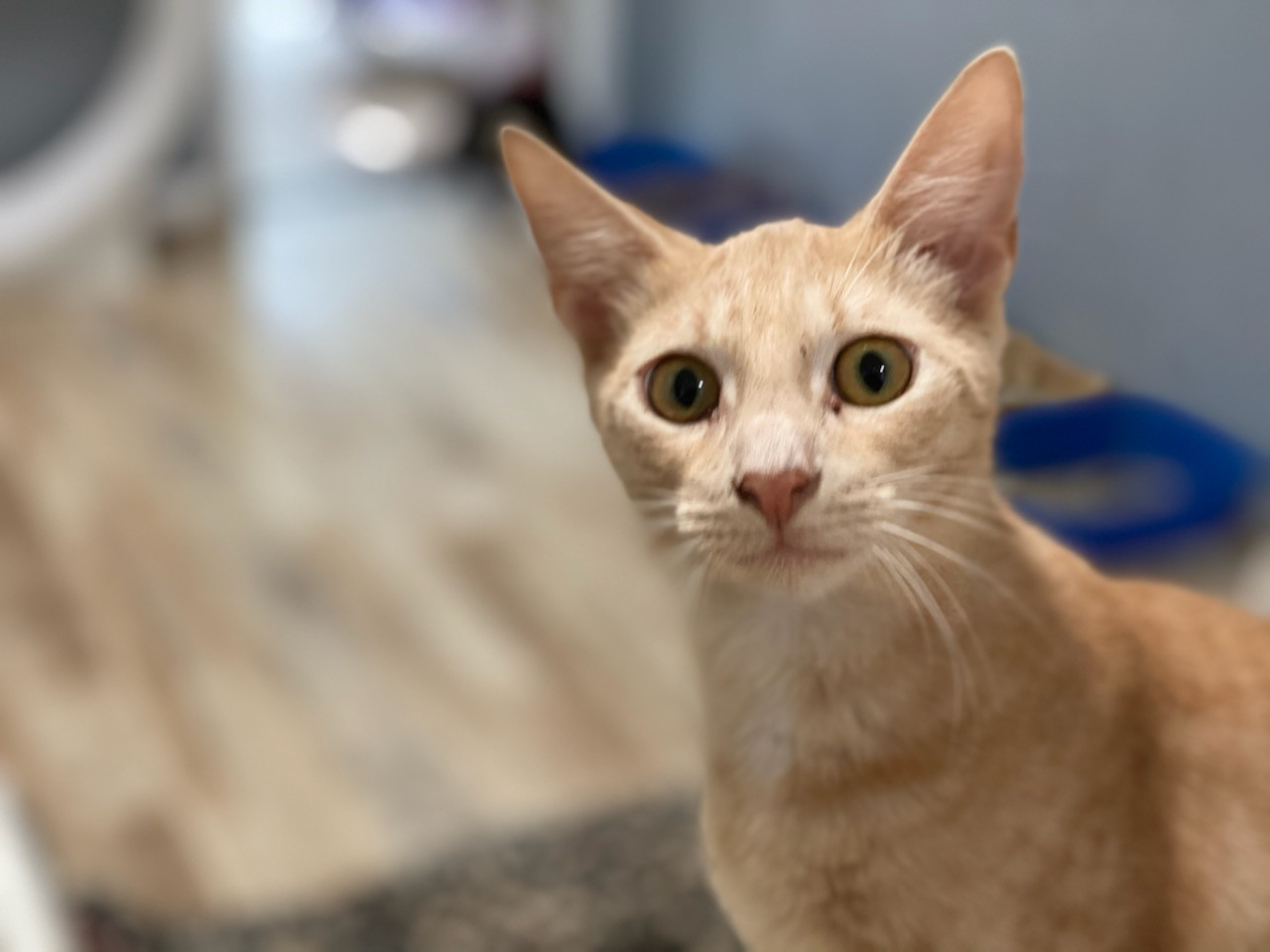 Dominos House Cat Rescue League 7.jpeg