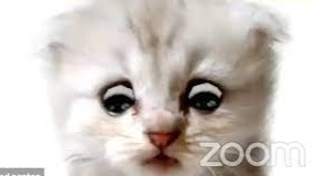 DominosHouse.org - I'm not a cat: lawyer gets stuck on Zoom kitten filter during court case