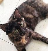 SASSY CAT DOMINOSHOUSE.ORG