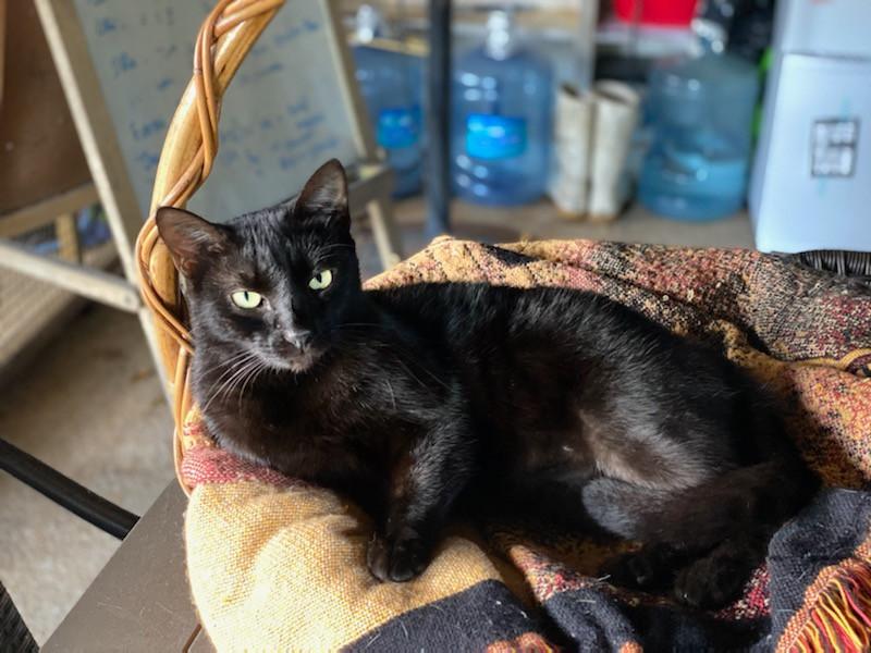 Dominos Cat Rescue League 4.jpeg