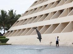 Show de Golfinhos (10).jpg