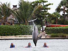 Show de Golfinhos (16).jpg