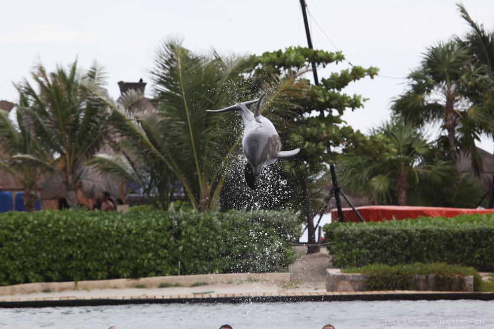 Show de Golfinhos (15).jpg