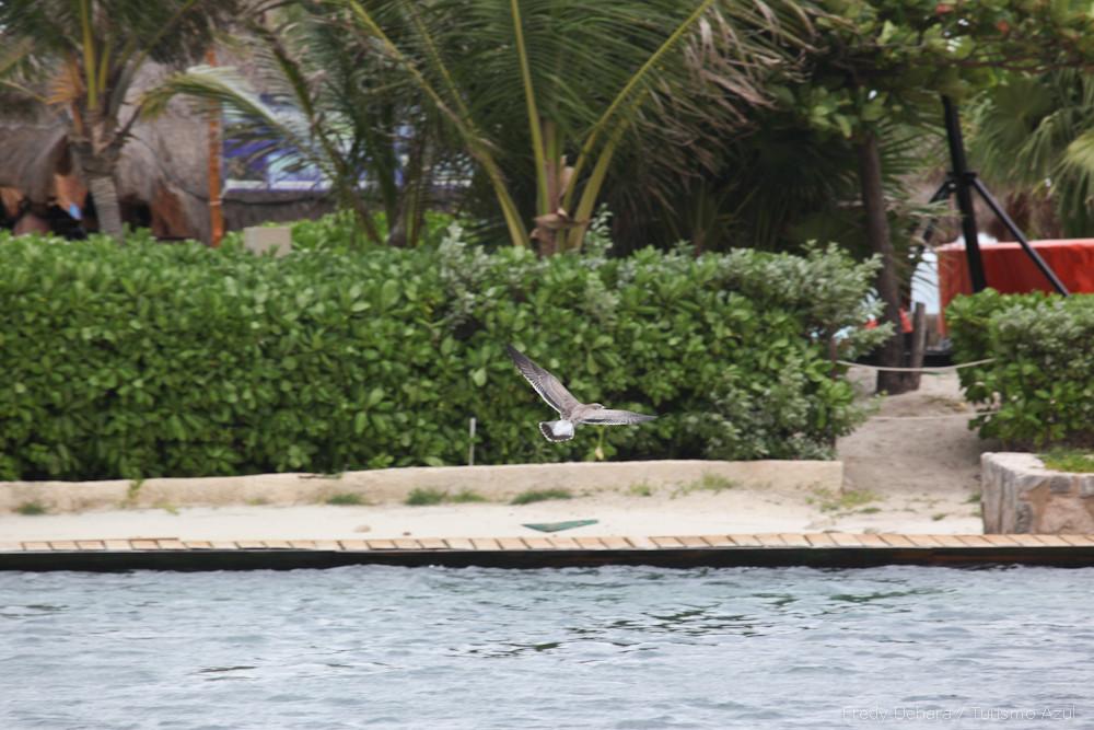 Show de Golfinhos (6).jpg