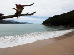 Praia dos Ranchos (1).jpg