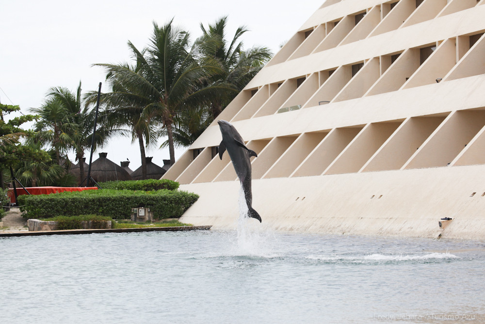 Show de Golfinhos (11).jpg