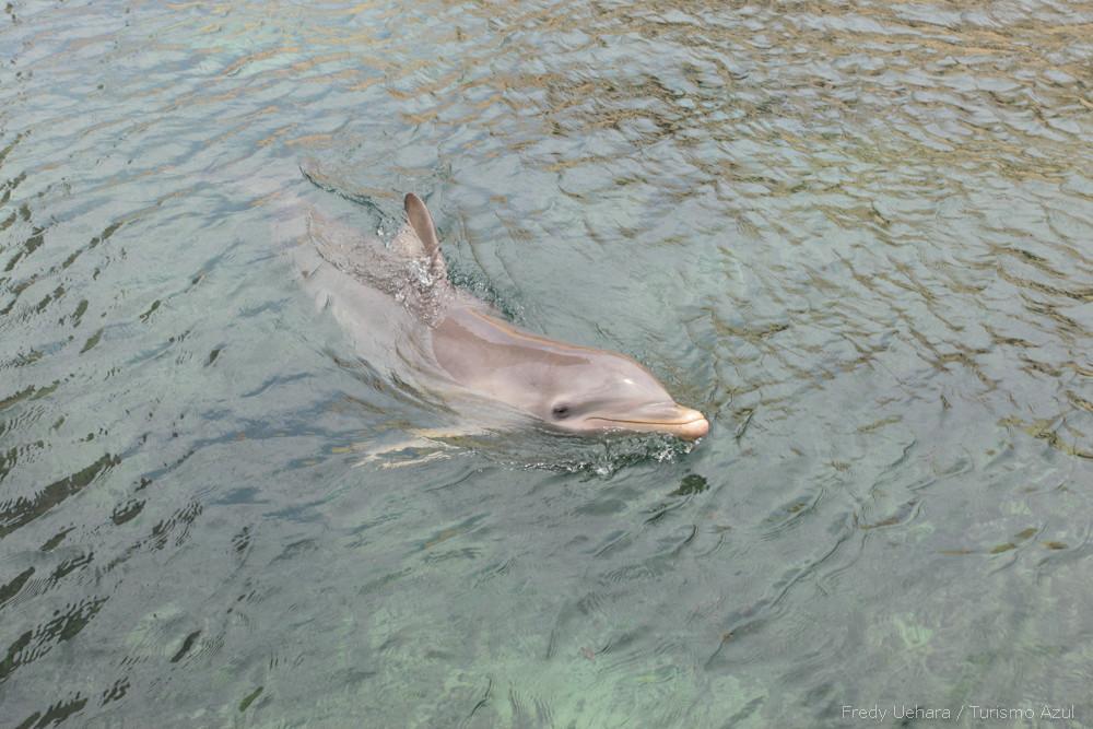 Show de Golfinhos (1).jpg